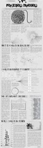 World Population Explosion